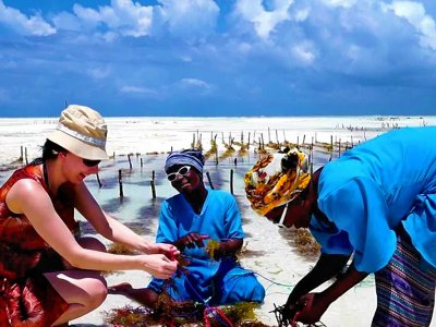 Plant seaweed in the ocean on Zanzibar