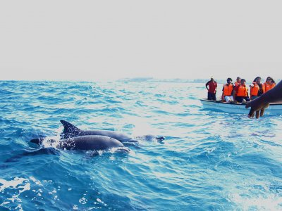 Swim with dolphins on Zanzibar