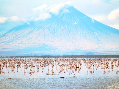 See millions of flamingos in Arusha