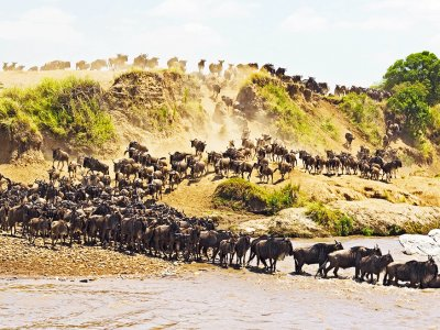 See the Great African Migration in Arusha