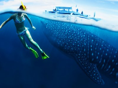 Snorkle with whale sharks on Zanzibar