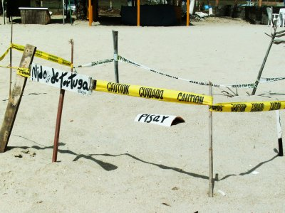 See turtles' nests on Margarita Island
