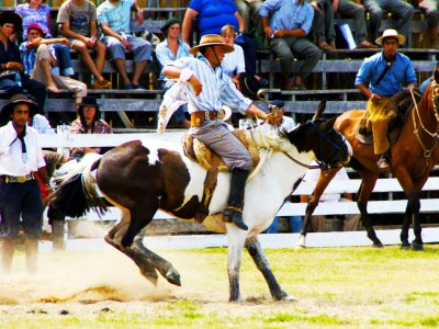 Watch gaucho rodeo in Tacuarembo