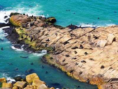 Spot sea lions from the lighthouse's top in Maldonado