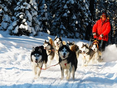 Take a husky-drawn ride in Rovaniemi