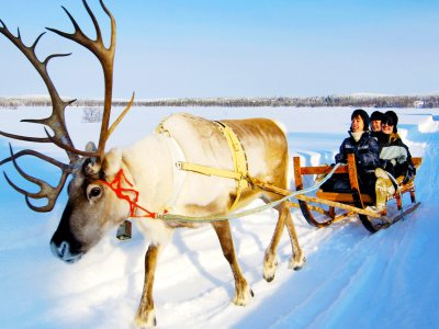 Take a reindeer-drawn sledge ride beyond the polar circle in Rovaniemi