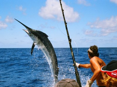 Go marlin fishing in Port Louis