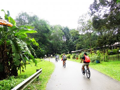 Go cycling in Ubin island in Singapore