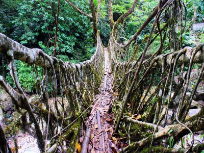 Cross a root bridge in Shillong