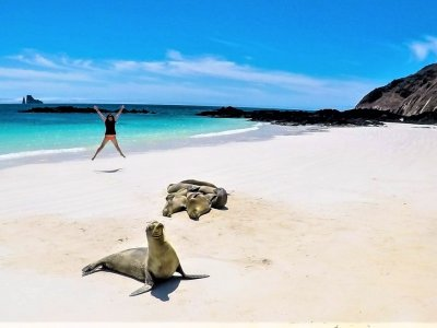 Sunbathe with seals on the beach in Galapagos Islands