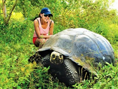 See the world's biggest tortoises in Galapagos Islands