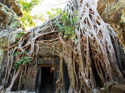 Look over Ta Prohm temple in Siem Reap