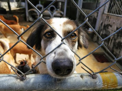 Sponsor a stray dog in Phuket
