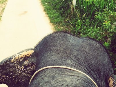 Go for elephant trekking on Koh Samui