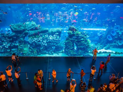 See the aquarium with the world's largest glass area in Dubai