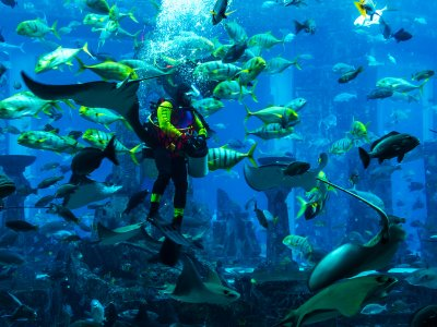 Dive with sharks in Dubai