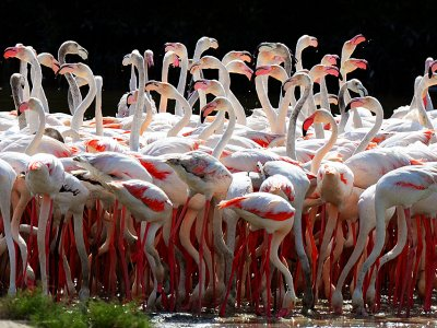 Watch flamingos in Dubai