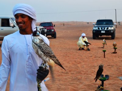 Attend falconry in Dubai