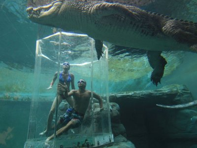 Dive in the Cage of Death  in Darwin