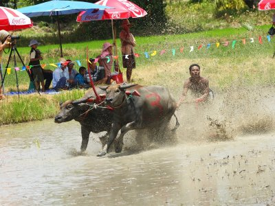 Visit the Buffalo Race in Pattaya