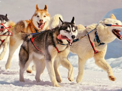 Take a husky sleigh ride in Rovaniemi