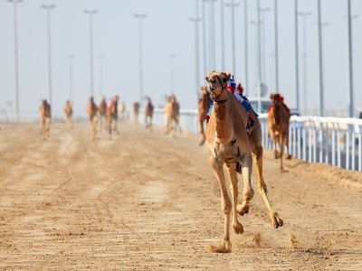See Camel Races in Dubai