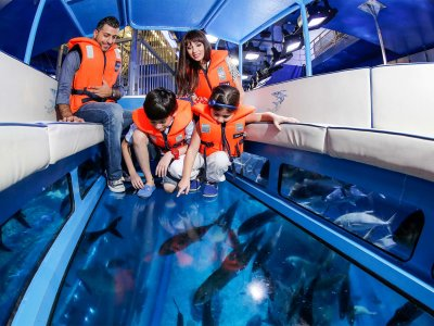 Take a trip in a glass-bottom boat in Dubai