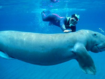 Dive with dugongs in Abu Dhabi