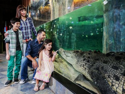 See the King Croc in Dubai