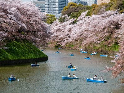 Take a boat ride among the sakura cherry blossom in Tokyo