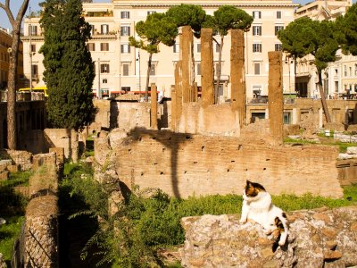 Feed the cats in the ruins of Largo di Torre Argentina in Rome