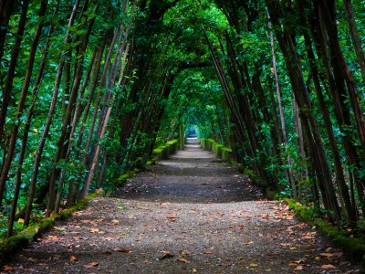 Take a walk through the Boboli Gardens in Florence