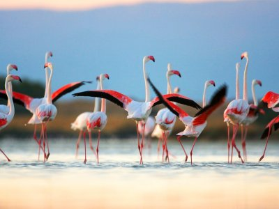 See the pink flamingos on Sardinia