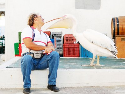 Feed pink pelicans on Mykonos