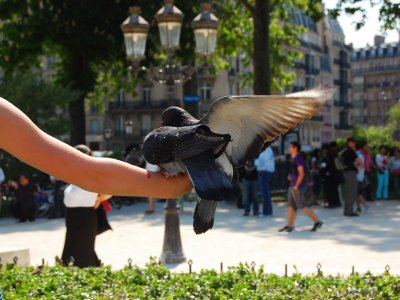 Feed the pigeons in Paris