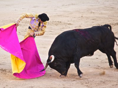 See a bullfight in Madrid