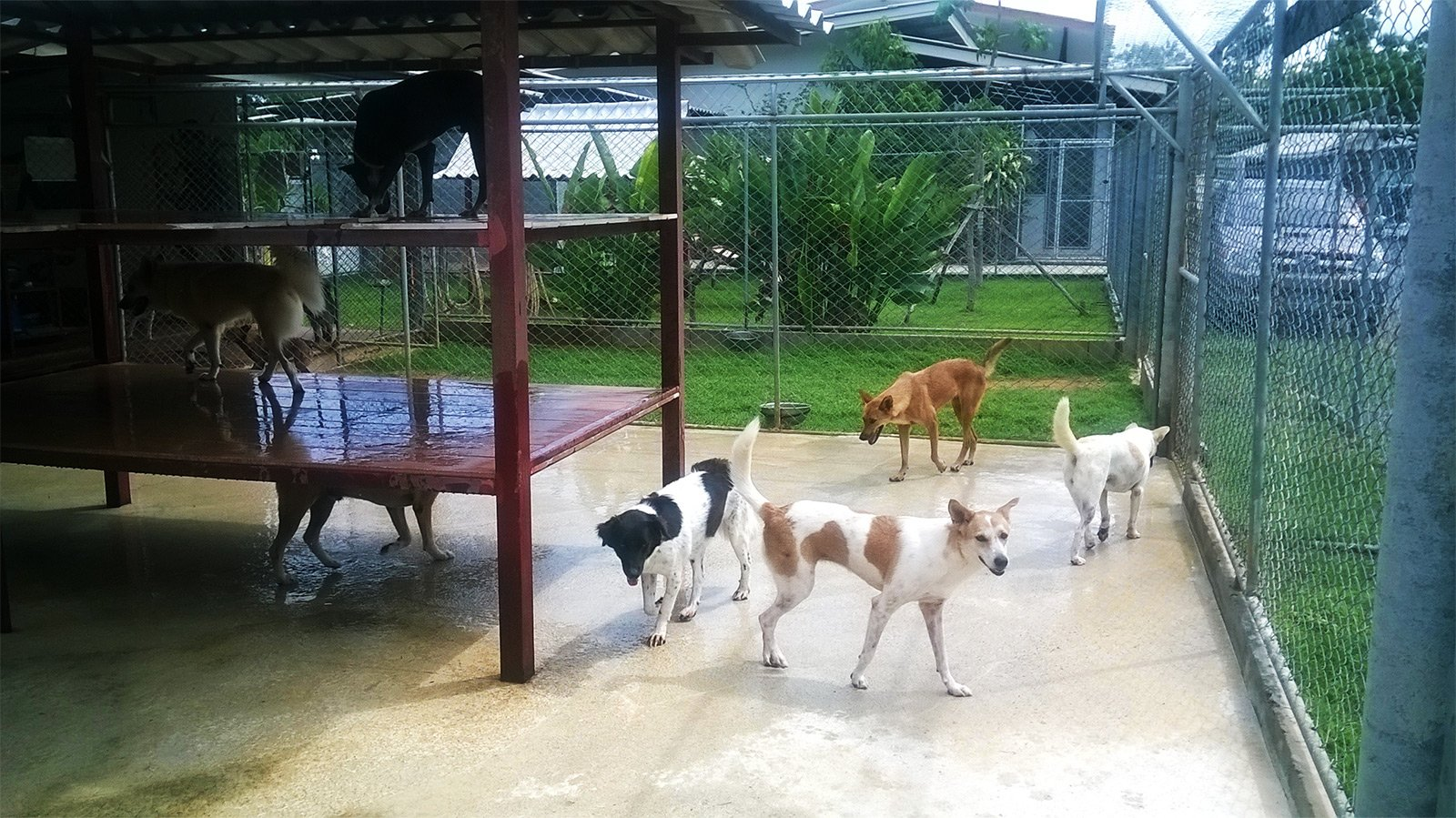 Soi Dog Foundation, Phuket