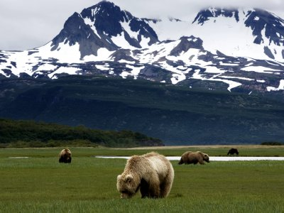 Katmai National Park and Preserve in Anchorage