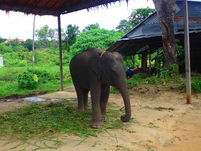 Phuchada Safari Park in Phuket