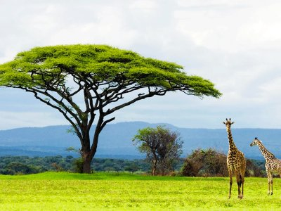 Serengeti national park in Mwanza