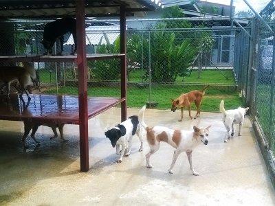 Sponsor a stray dog, Phuket