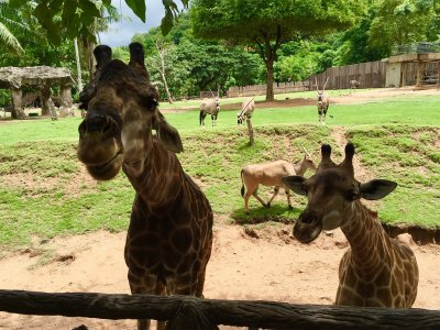 Khao Kheow Open Zoo in Pattaya