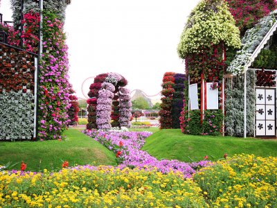 Dubai Miracle Garden in Dubai