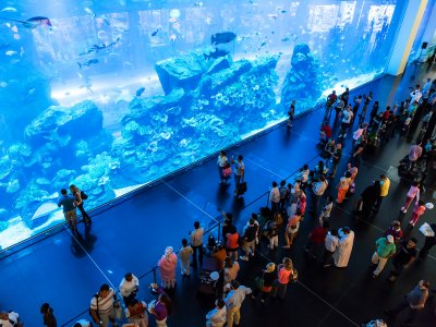 Dubai Aquarium & Underwater Zoo in Dubai