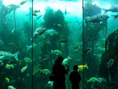 Two Oceans Aquarium in Cape Town