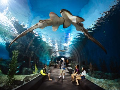 Siam Ocean World Aquarium in Bangkok