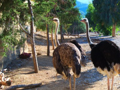 Ostrich Farm & Park on Rhodes