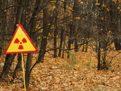 The Red Forrest in Chernobyl